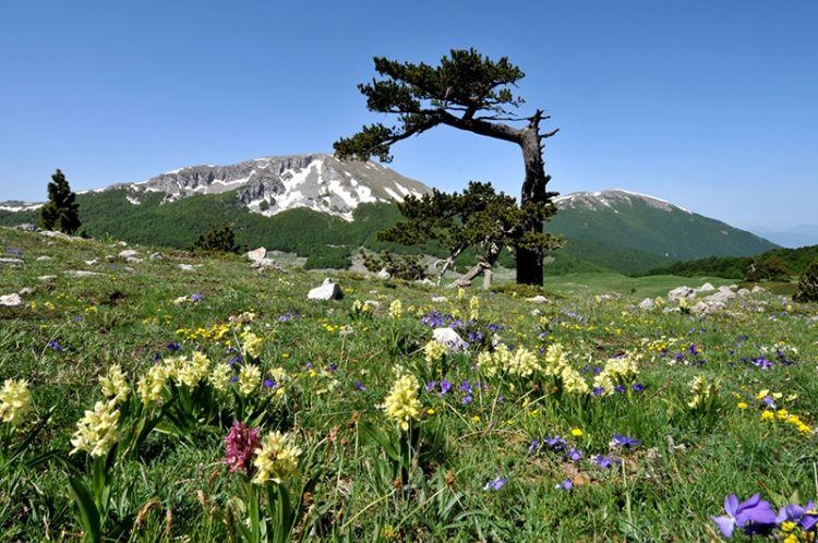 Parchi e riserve in Italia: un bene da tutelare, per l'ambiente e per l'economia