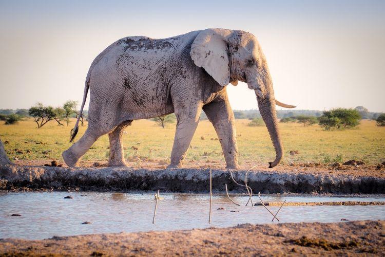 La perdita di biodiversità e gli animali a rischio estinzione