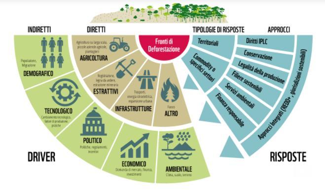 Allarme deforestazione: dal 2004 scomparsi 43 milioni di ettari