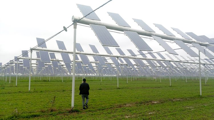 Rinnovabili: fotovoltaico in agricoltura conviene, ecco come e perché