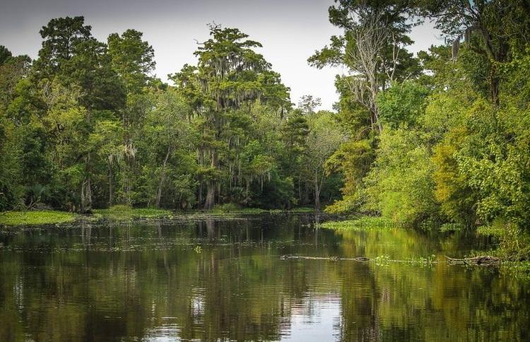 Acqua dolce e spugne per la CO2, così le zone umide aiutano il Pianeta