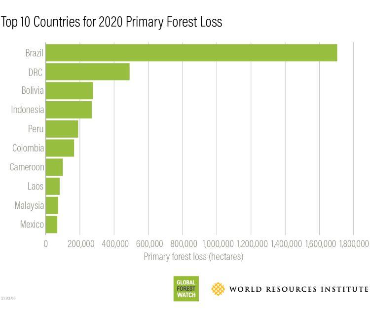 I 10 paesi con la peggior deforestazione nel 2020