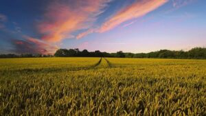 Il ruolo dell'agricoltura per la transizione energetica