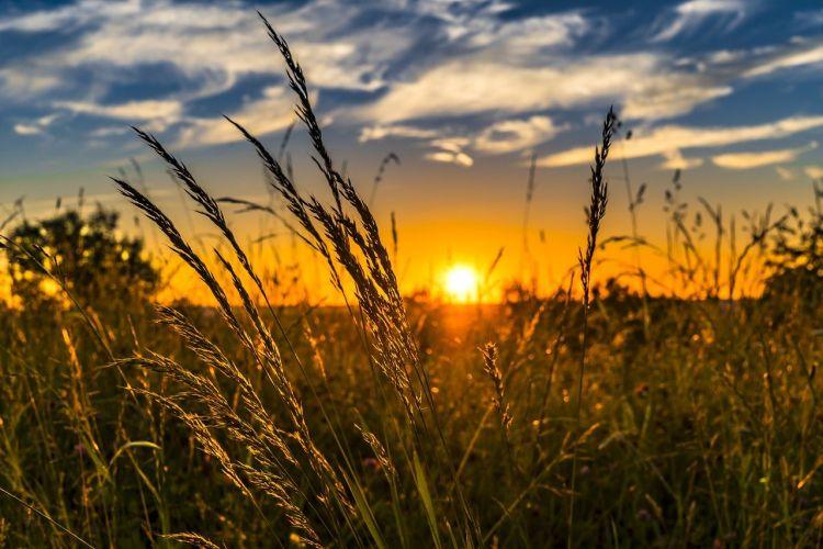 Agricoltura per la transizione energetica: biogas e biometano