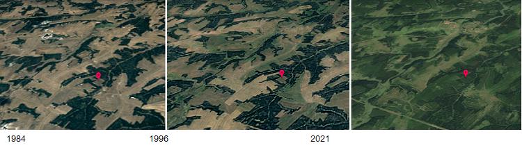 Riconversione di campi in foreste