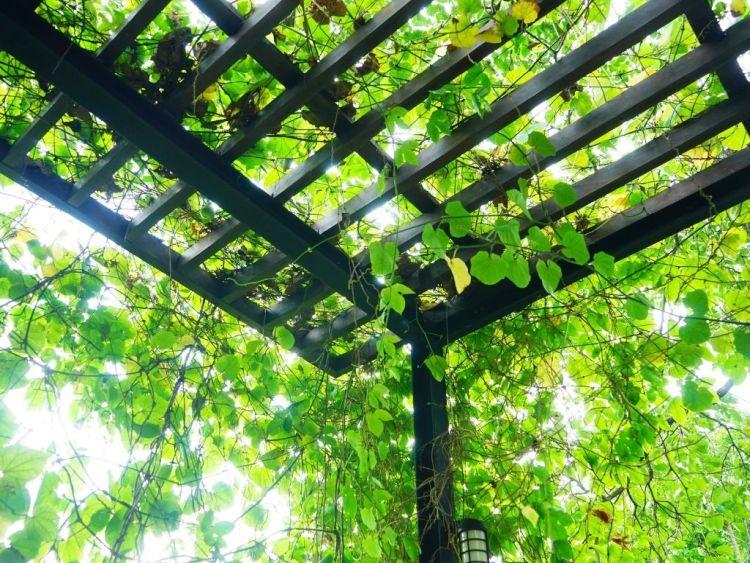 I vantaggi della vegetazione per ombreggiare casa