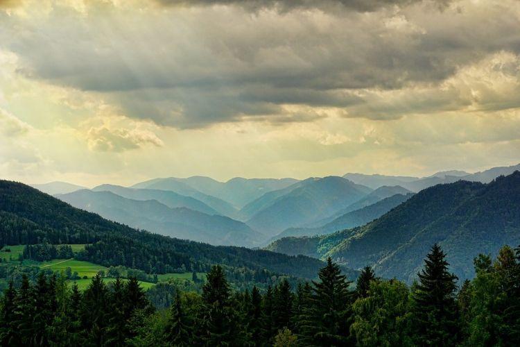 Foreste ed emissioni di CO2: all'Italia serve un registro sui crediti di carbonio
