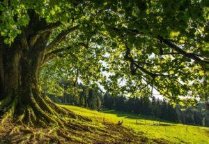 Foreste italiane per la transizione ecologica: serve una gestione sostenibile