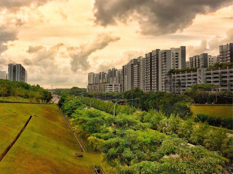 Forestazione urbana: che cos'è e perché è importante