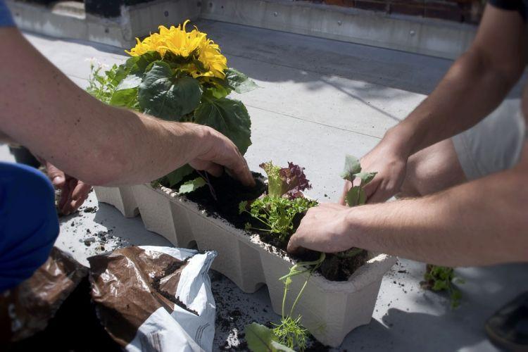 Guerrilla gardening: salvare la città con il giardinaggio