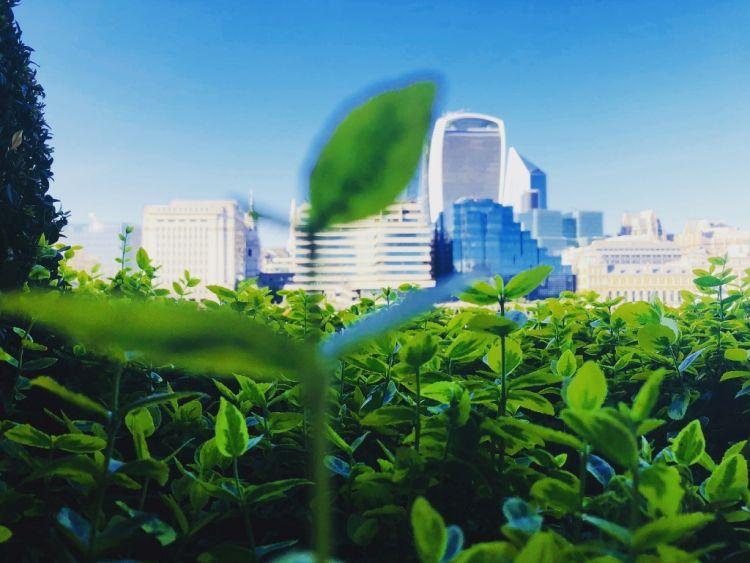Sostenibilità e centri urbani: la strada per decarbonizzare le città