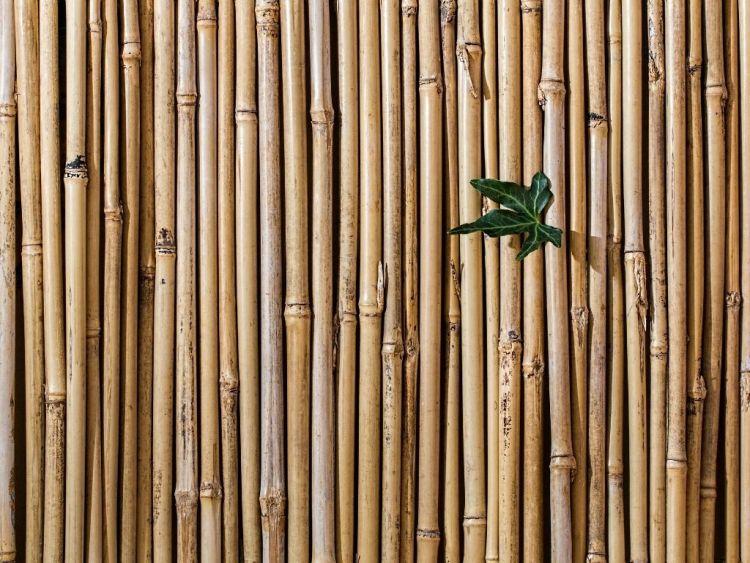 Pavimenti: Scegliere il bambù per finiture sostenibili