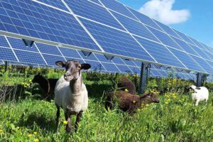 Agrivoltaico: la sinergia tra agricoltura ed energia rinnovabile