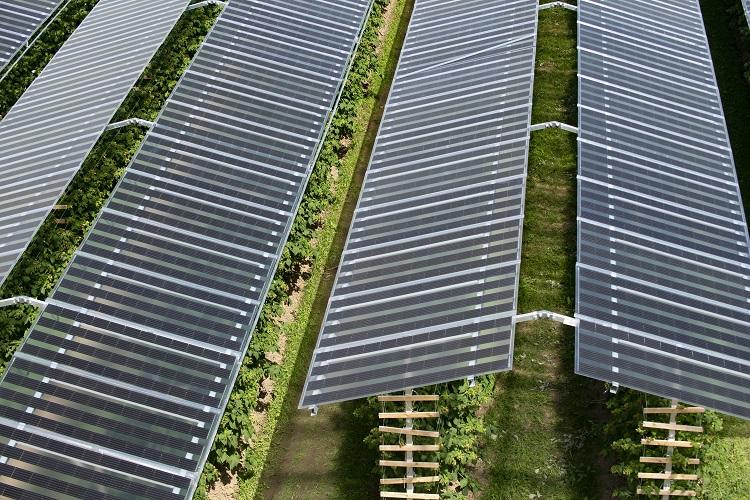 "L'agri fotovoltaico di BayWa r.e. riceve ""The smarter E AWARD"""