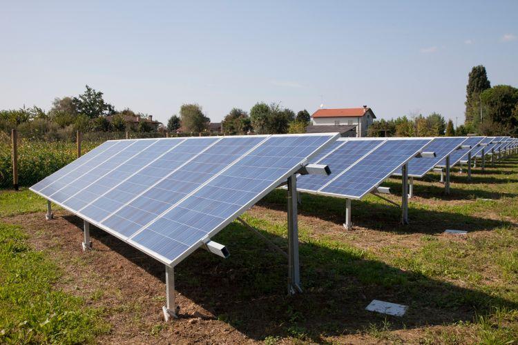 Fotovoltaico e agricoltura: lo sviluppo dell'agrivoltaico è su scala mondiale