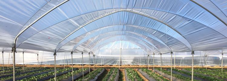 Recupero della plastica in agricoltura: l'iniziativa di Ecopolietilene