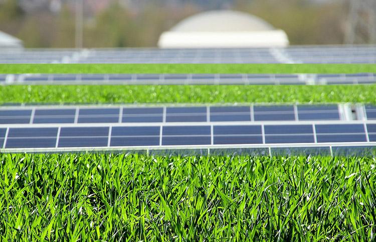 Fotovoltaico e tetti verdi: una combinazione ideale per città resilienti