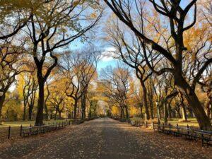 Parchi urbani: un aiuto per l'ambiente e per il benessere dei cittadini
